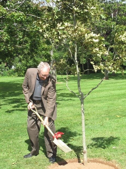 Planting a Red Oak.
